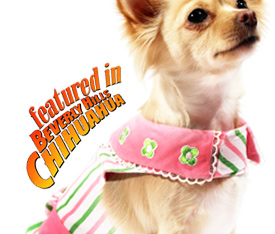 Chihuahua Clothes And Accessories At The Famous Chihuahua Store