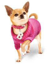 Bruiser's Outfit - Pink Sweater / Diamante Collar &amp; Lead Set - The Pink Knitted Turtle Neck Sweater and Crocodile Pink Collar are both worn by Bruiser the Chihuahua in Legally Blonde The Musical currently touring the UK and Ireland and coming to a town near you soon. Give your pup star quality and save when you buy both together!<br /><br />Bruiser's Pink Knitt...